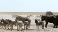 overcrowded waterhole with Elephants, zebras, springbok and orix video