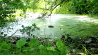 overgrown pond in wildlife video