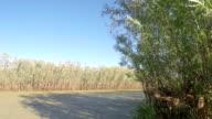 Overgrown sludge stream. Full HD Stock Footage video