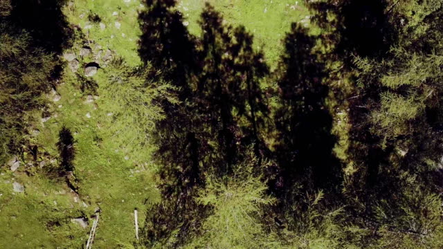 overhead aerial flight over italian alps mountain pine woods. Wild green nature outdoor. above top view 4k drone forward video