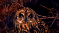 Owl sits in the shadows among the branches, turns his head and looks ahead video