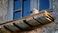 Owl sits on old abandoned building video