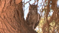 Owl sitting on a tree video