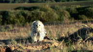 owl taking off in slowmotion video