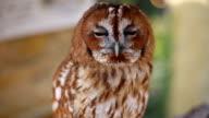[HD] Owl video