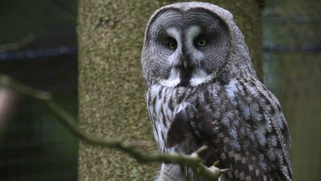 owl video
