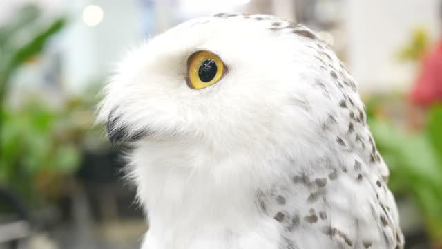 owl's eye video