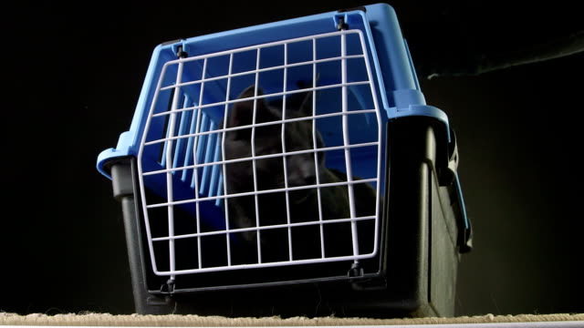 Owner opening the door of pet cage carrier with a gray cat inside video