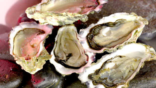 Oyster video