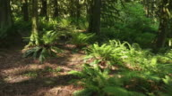 Pacific Northwest Forest dolly shot video