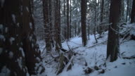 Pacific Northwest Forest Snow 4K UHD video