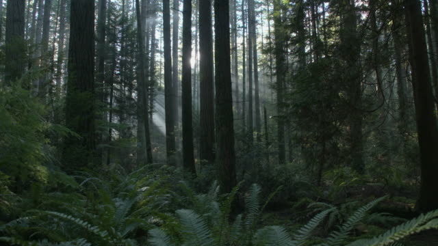 Pacific Northwest Forest Sun Flare dolly shot left video