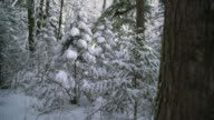 Pacific Northwest Forest Winter 4K UHD video