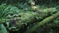 Pacific Northwest, Moss Covered Logs video