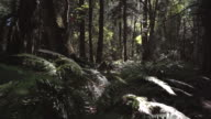 Pacific Northwest Rainforest Sunshine. UHD video