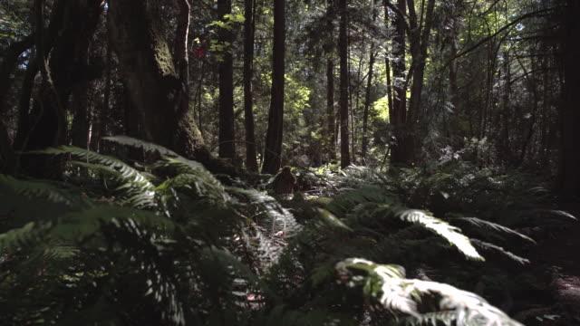 Pacific Northwest Rainforest Sunshine. UHD video