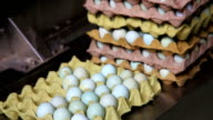 pack eggs in the factory video