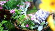 Packing Hanging Basket video