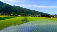 Paddy field. video