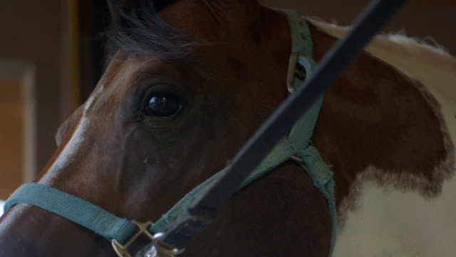 Paint horse wearing halter stands patiently at cross-tie video
