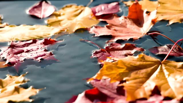 Paints Solar Autumn video