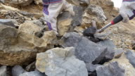 Paleontology Dig Fossil Excavation and Extraction video