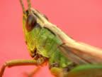 PAL:Grasshopper video