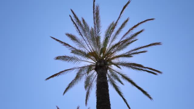 palm against sun video
