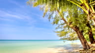 Palm and fir tree on the beach video