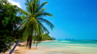 Palm and Tropical Beach video