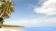 Palm beach and sea video
