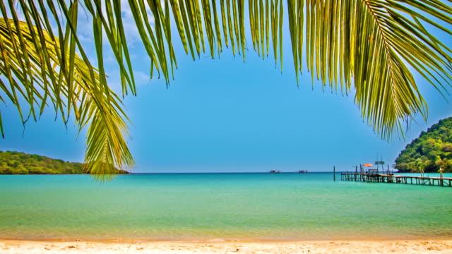 Palm beach video