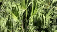 Palm Fronds Blowing in the Wind Close-Up video