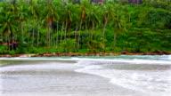Palm grove on the beach video
