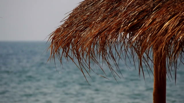 Palm leaves beach umbrella swinging in the wind close-up video