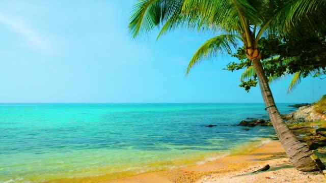 Palm near sea water video