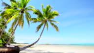 Palm on the beach video