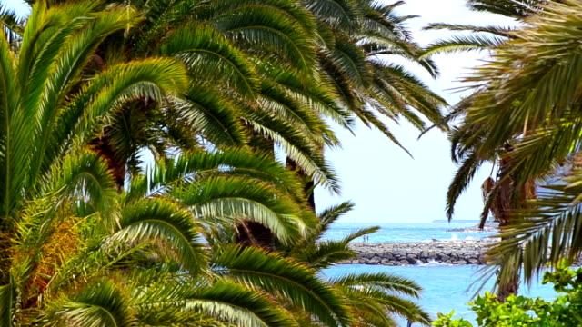 Palm on tropical beach video