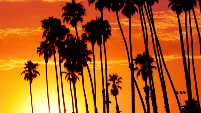 Palm springs in california at sunset video
