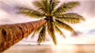 Palm sunset timelapse video