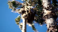Palm tree, a bottom view. The camera moves in a horizontal plane video