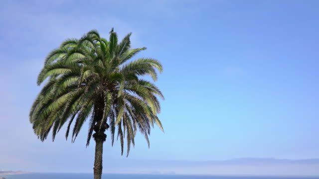 Palm tree against blue sky with copyspace video
