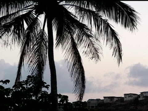 Palm tree against the sky. video