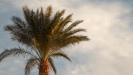 Palm tree against the sky with clouds video