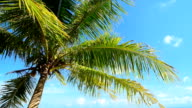 palm tree and blue sky video