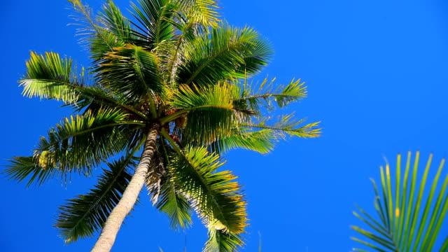 palm tree and blue sky video
