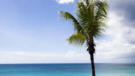 Palm tree and Caribbean sea video