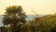 Palm tree and flowering bush on the background of the sea video