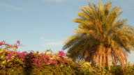 Palm tree and flowering bushes against the sky video