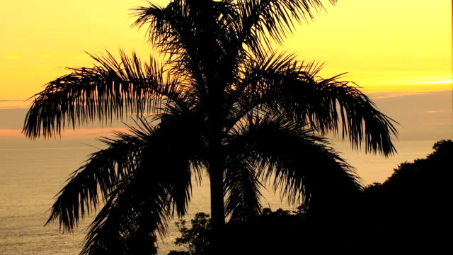 Palm Tree at Sunset video